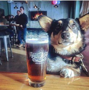 Hard Knox Brewery Dog Posing Beside Freshly Filled Pint of Craft Beer