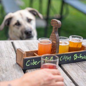Dog Watches Intently as Owner Indulges in Hard Knox Brewery Beer Flight