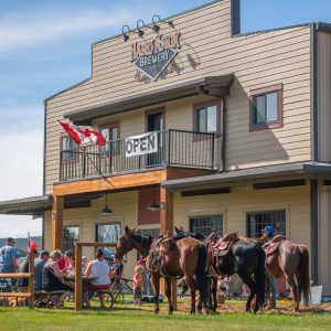 Three Horses are Seen Outside Hard Knox Brewery as Patrons Enjoy Cold Craft Beer on the Spacious Outdoor Patio