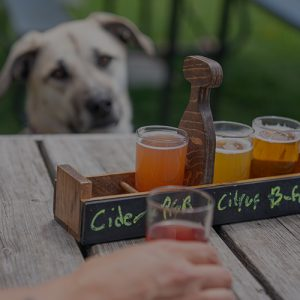 Dog Looks Intently at Owner Sipping Ice Cold Hard Knox Brewery Beer